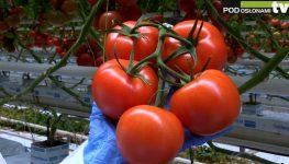 """HortiWizja (odc. 5) - Konferencja nt. uprawy pomidorów """"Advice to Advisors"""""""