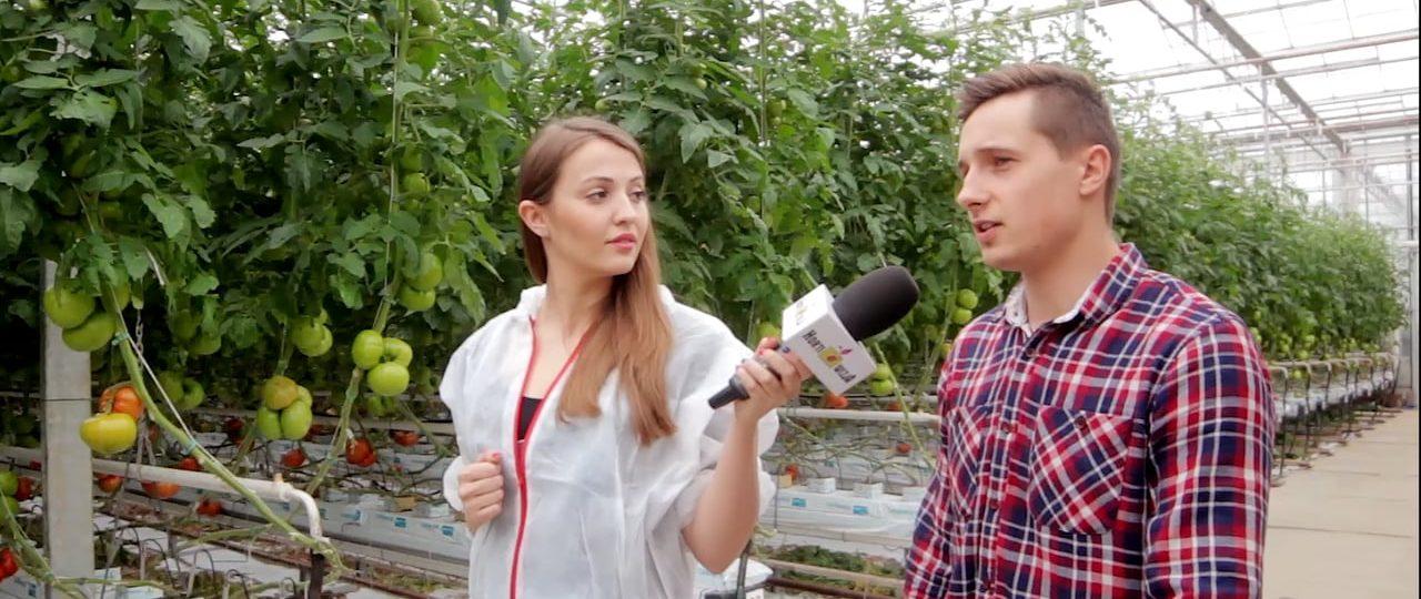 HortiWizja (odc. 6) – Uprawa i ochrona pomidorów wielkoowocowych