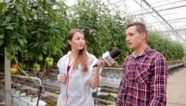HortiWizja (odc. 6) - Uprawa i ochrona pomidorów wielkoowocowych