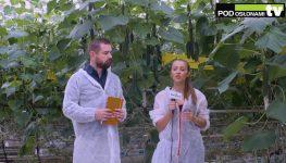 HortiWizja (odc. 12) - Ogórki szklarniowe - uprawa i ochrona