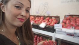 """Pomidory - nowe odmiany w Gołuchowie. Projekt """"Grono"""""""