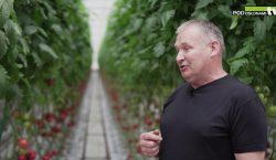 HortiWizja. Pomidor malinowy Katy Rose F1 - wczesny i smaczny