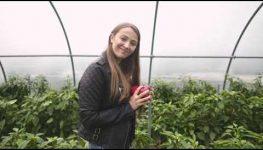 HortiWizja - Nowe odmiany papryki