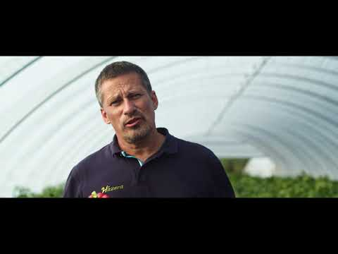Uprawa papryki – nowe odmiany, nawożenie, ochrona biologiczna