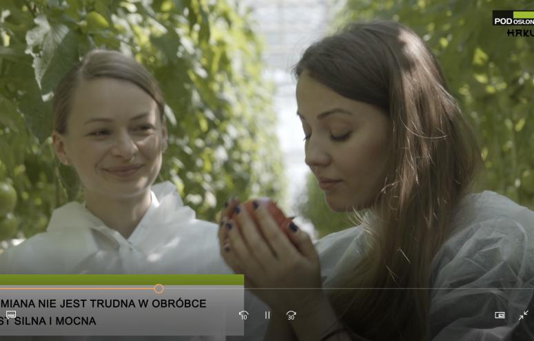 Pomidor malinowy Hakumaru w Skrajni Rychnowskiej